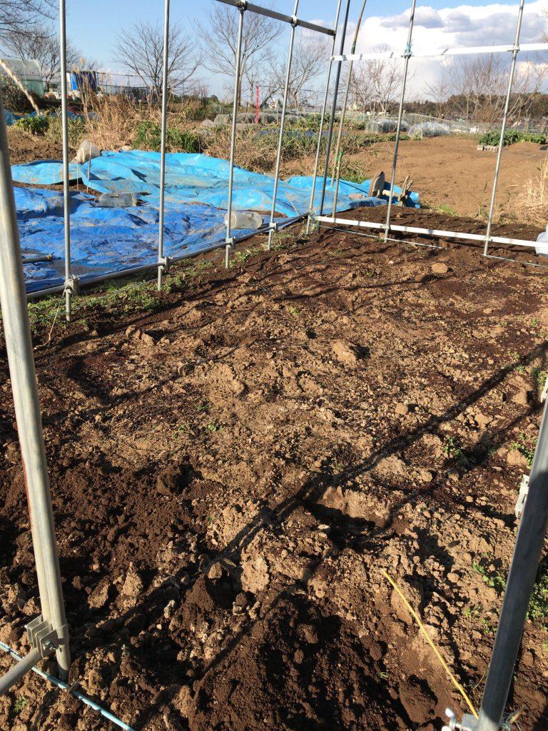 トマトの土壌作り