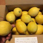 愛媛 きなはいや 防カビ剤不使用レモン