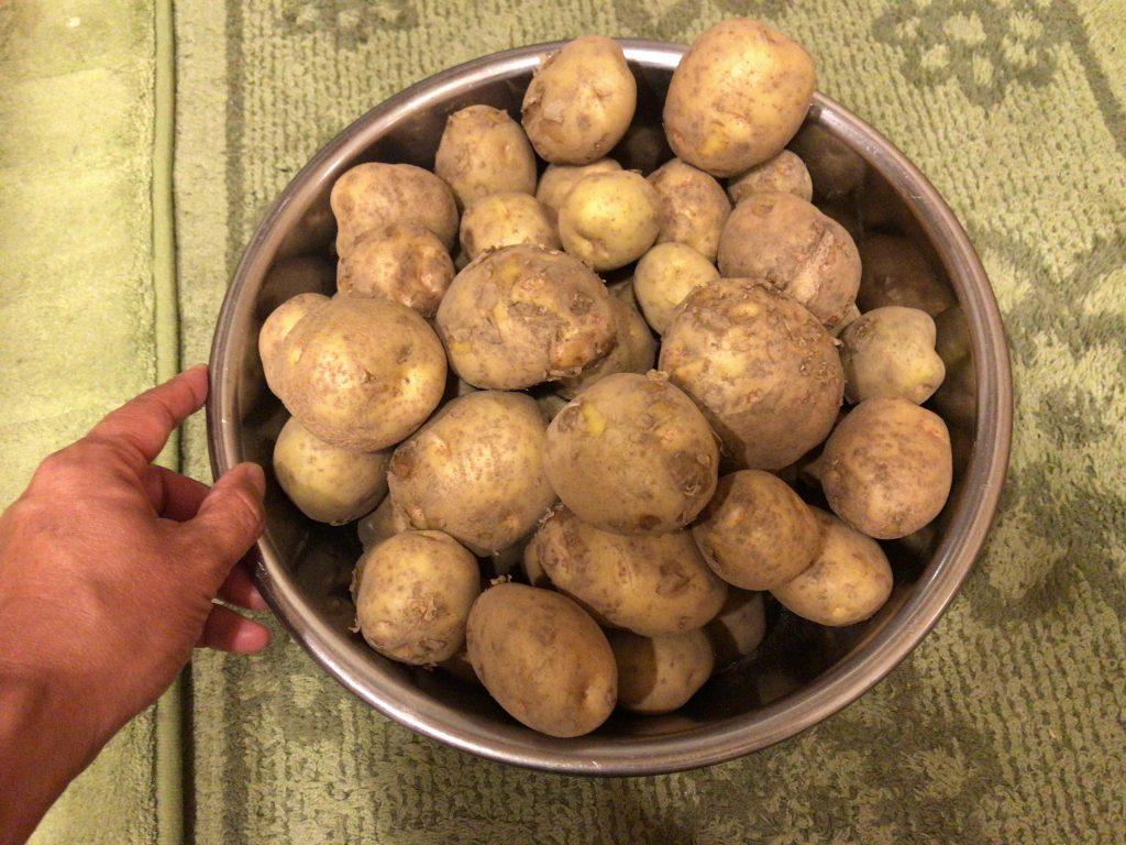 キタアカリ ジャガイモ 野菜作り