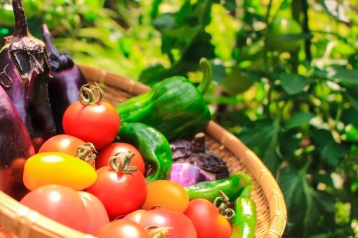 ナチュラルフード 野菜