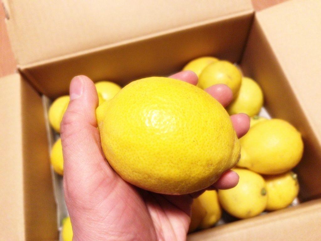 国産・無農薬レモン ~レモン屋やまもと~